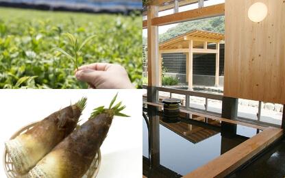 宇部市の特産品・観光スポットの写真(お茶、タケノコ、楠こもれびの郷 温泉)