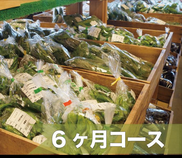 朝どれ「産直野菜」の詰め合わせ